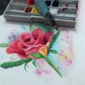 Rose – aquarelle