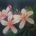 Fleurs de frangipanier – Peinture à l'huile 19x25cm